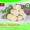 products china adaptable yellow maize