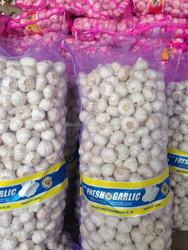 pure white garlic to BANGLADESH market