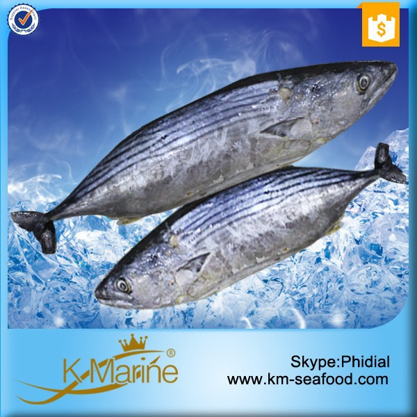 Export best price and high quality sarda frozen fish buy for Best frozen fish
