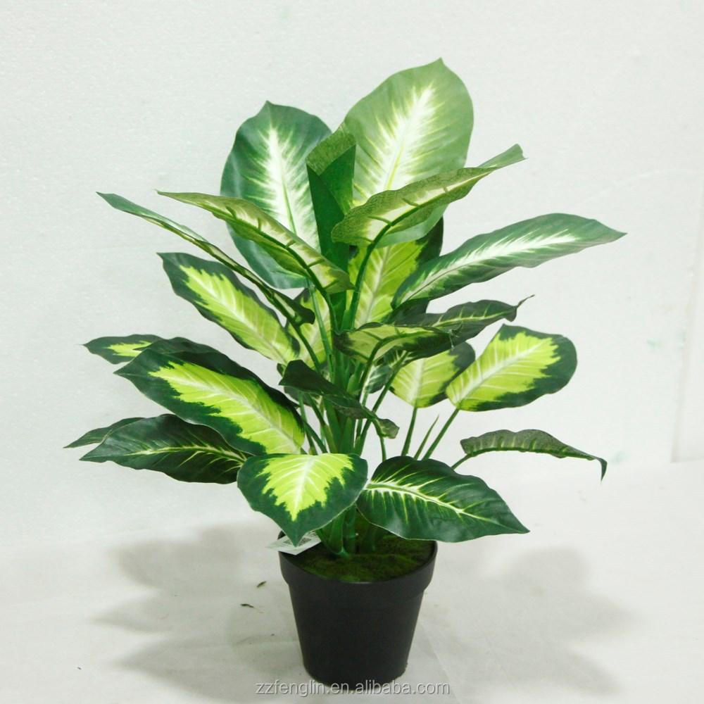 pas cher gros ext rieur int rieur plante en pot. Black Bedroom Furniture Sets. Home Design Ideas