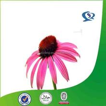 echinacea extract/echinacea purpurea root extract/powdered echinacea purpurea extract