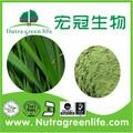 Gerstengrassaft pulver, 100-200mesh, bio-zertifiziert