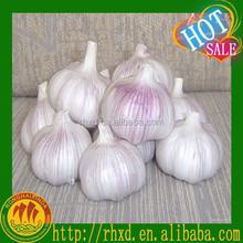 pure white garlic,natural garlic,garlic price