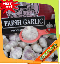 outstanding red garlic,from jinxiang with cheap price