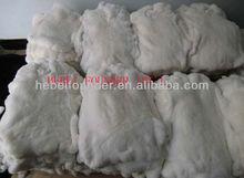 Rex Rabbit Skins