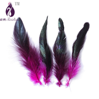 Dyed coque rooster feathers ,plume feathers