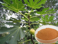 Pure & natural new coming fig leaf extract price