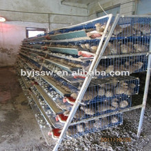 quail laying cage/quail cage and water system