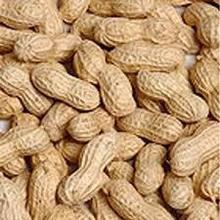 Good peanut kernel 24/28 40/50 //peanuts 40/50//