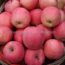 Wholesale Prices Fresh Apple Fruit / Red Fresh Apple