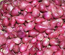 red onion shallot