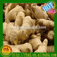 Crop 2015 Dried Ginger for Sales (The best quality)
