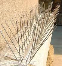 Pigeon SS Wire Spikes Anti Bird Wire Deterrent Repellent Spikes Suppliers in UAE, Dubai, Abu Dhabi, Sharjah Oman Qatar
