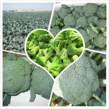 frozen vegetable product