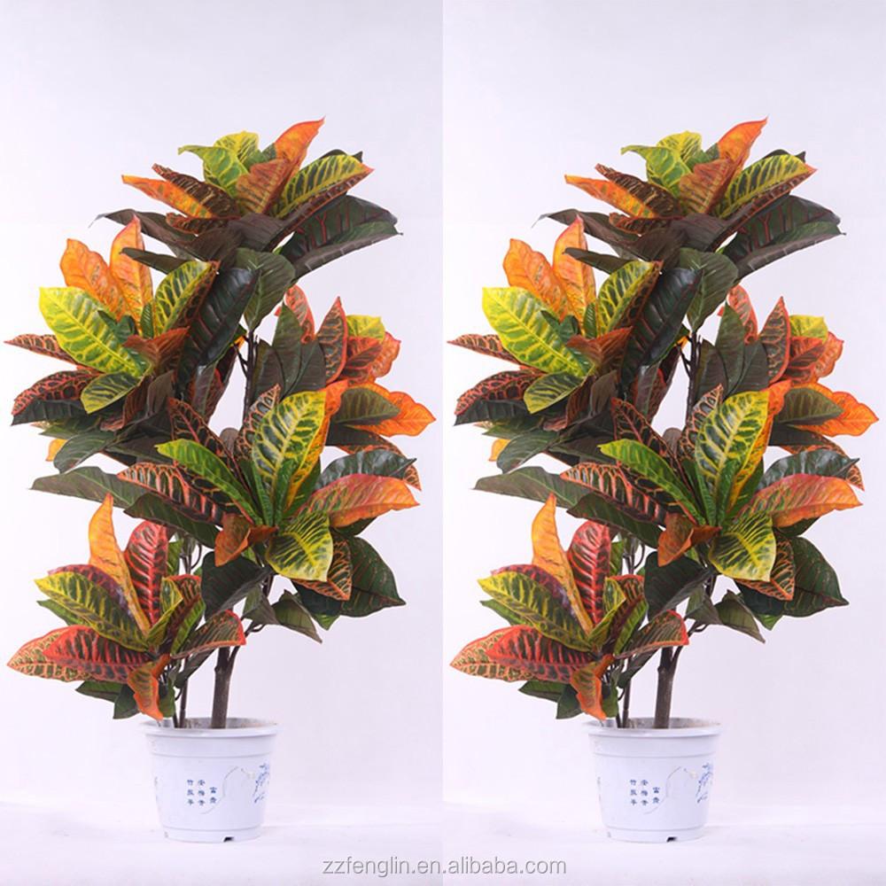 Plante exterieur pas cher for Plante en ligne pas cher