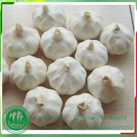 garlic price in usa