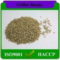 cultura agrícola rodada feijão arábica e grãos de café cru