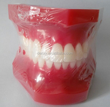 Good quality Red Teeth plastic Dental Care study model