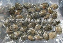 COOKED BABY CLAM