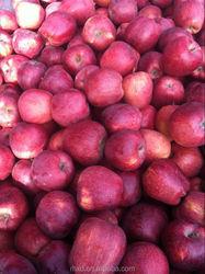 2015 sweet apple fruit/apple fruit import from china
