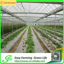 EU style multi span film greenhouse china for tomato plant