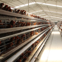 automatic poultry farm equipment/used chicken cages for sale