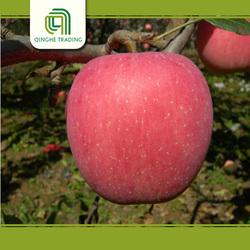 wholesale fruit and vegetable importer 10kg carton