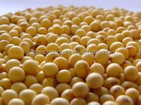 BV factory suply Soy Isoflavones extract powder