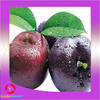 new crop dried best discount preserved Plums