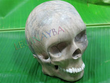 carved home decor wooden skull