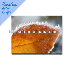 partial freezing leaves canvas art digital photo printing