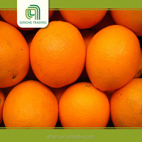 bulk fresh valencia oranges for sale with low price