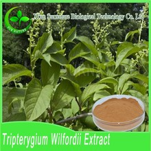 100% Natural Triptolide 0.48% tripterygium wilfordii for sell/tripterygium wilfordii hook.f.