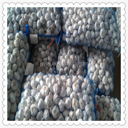 chinese fresh vegetables raw material fruits wholesale garlic price