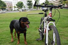 The best selling products pet products dog bike leash products