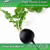 Pure Black Radish Extract,Black Radish Extract Powder,Black Radish Extract Supplier 4:1~20:1