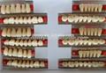 La certificación del ce color 84 pc completa- conjunto compuesto de resina sintética dientes