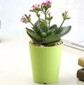 Rodada de plástico plantas vasos- 3.5 polegadas