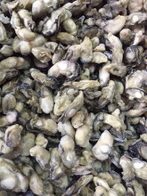 High Quality Seafood Frozen Shellfish Oyster Meat Size 100-200