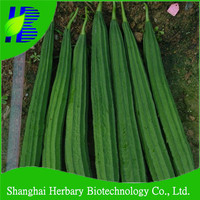 2015 Hot sale sponge gourd seeds for sowing