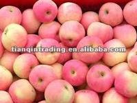 2012 fresh green gala apple seller