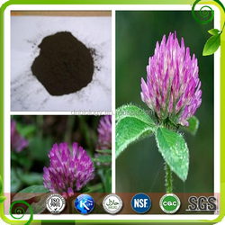 natural red clover seeds extract red clover P.E red clover extract