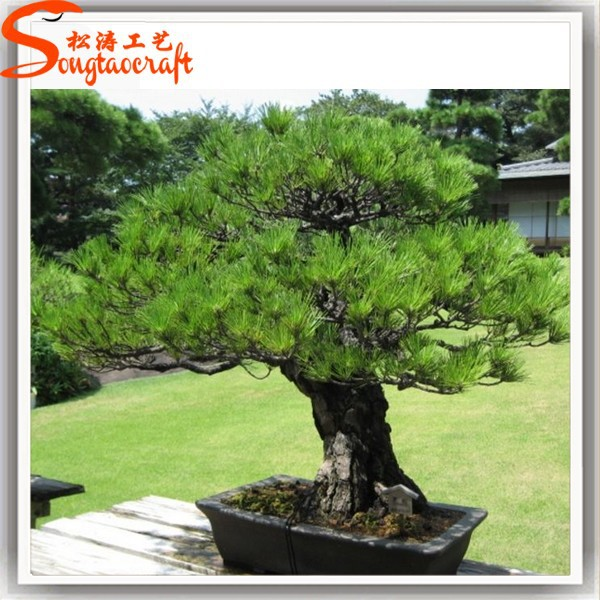 Backyard Bonsai Trees :  Bonsai Tree,Large Outdoor Bonsai Trees,Bonsai Tree Product on Alibaba