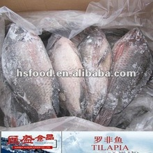 Frozen Whole Round Tilapia Fish 500g to 800g HS62
