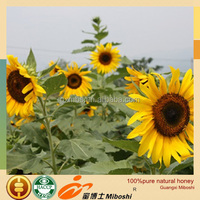 professional OEM natural sunflower 100%pure bee honey