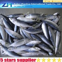 IQF scomber japonicus 100-500g frozen pacific mackerel prices