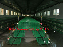 Taiyu high quality PVC coated or plastic coated design poultry equipment layer chicken cage