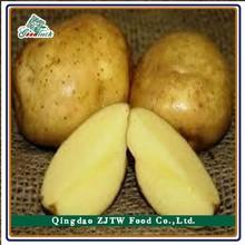 2015 High Quality Fresh Atlantic Potato