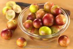 Camu Camu Berry Extract 4:1