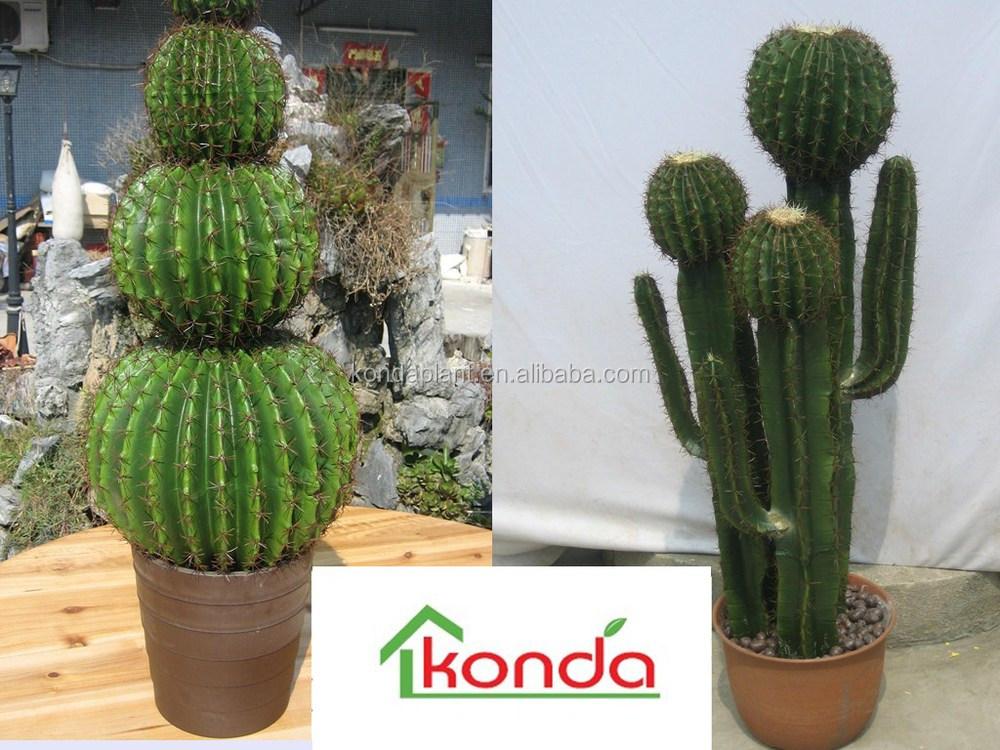 Plante cactus pas cher for Grande plante pas cher